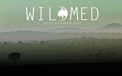 WildMed, the last mediterranean forest