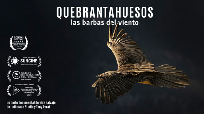 Quebrantahuesos, the wind beards