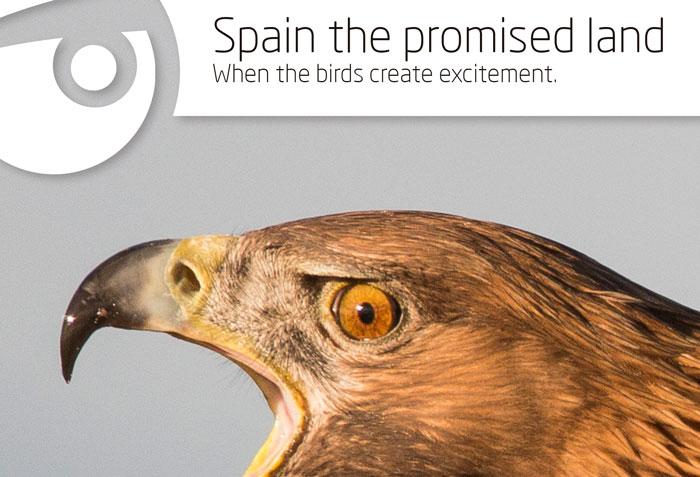 España, la tierra prometida. Cuna de estirpes